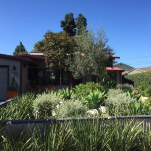 beautifully designed, drought tolerant front yard